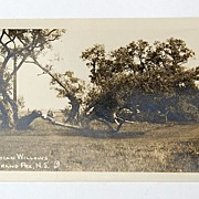 Vintage Evangeline Acadian Willows Post Card