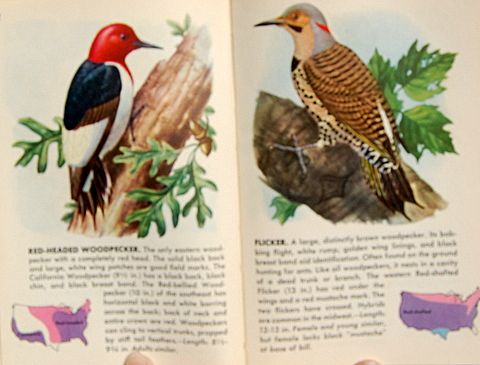 1949 A Guide To The Most Familiar American Birds