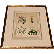 Pair Of Lovely Framed Hand Colored English Botanicals