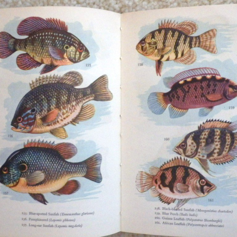 Vintage hardbound book aquarium fish in color from for Colorful fish book