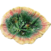 Early Etruscan Majolica Begonia Leaf dish Excellent Condition Circa 1879