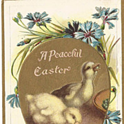 Easter Chicks Eating Spring Peas Post Card