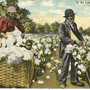 Black Man Woman and Child Picking Cotton Post Card