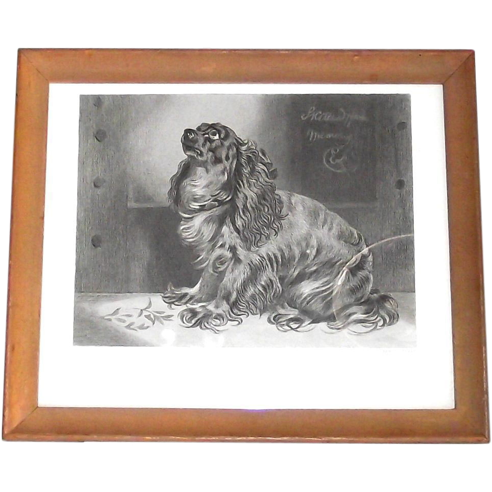 """Framed Etching """"The Pet of the Duchess""""  Cocker Spaniel"""