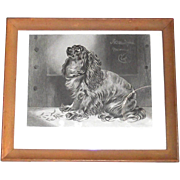 "Vintage Cocker Spaniel Etching ""The Pet of the Duchess"" Framed Print"