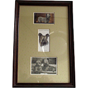 Vintage Skye Terriers Victorian Tobacco Trade Cards Beautifully Framed