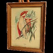 Framed JOHN GOULD Print by Sidney Z. Lucas.  Leadbeater's Cockatoo.  Circa 1930' - 1940's.