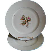 "Set of 2 - 1880's Charles Haviland & Co. Limoges ""Moss Rose"" Pattern Dinner Plates"