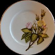 Charles F Haviland H.P. Floral Cabinet Plate, Artist Signed, 5 of 11