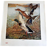 Our American Game Birds Portfolio of 18 Prints by Lynn Bogue Hunt - 1917 E. I. DuPont de Nemours & Co.