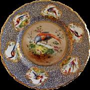 """Royal Doulton """"Bird of Paradise"""" Motif Plate (1 of 6) - E Percy/Robert Allen"""