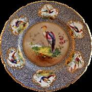 """Royal Doulton """"Bird of Paradise"""" Motif Plate (2 of 6) - E Percy/Robert Allen"""