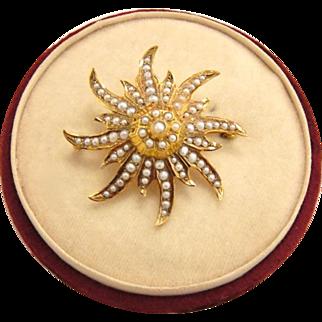Victorian 14K Gold Starburst Seed Pearl Pendant Brooch in Box