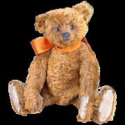 Rare 1906 Darling Cinnoman Steiff Teddy Bear