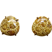 Fossilized Coral Pierced Button Earrings