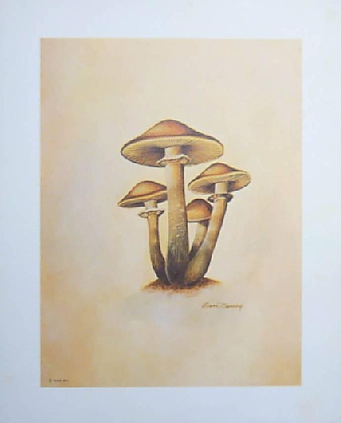Mushroom Vintage Prints by Ruane