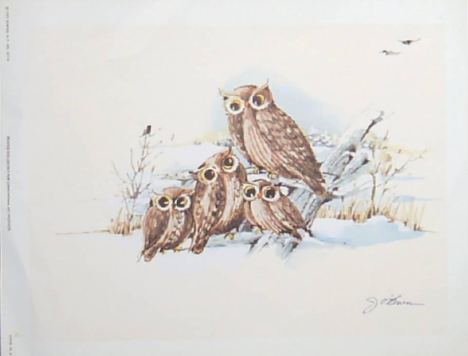 Owls J. O'brien