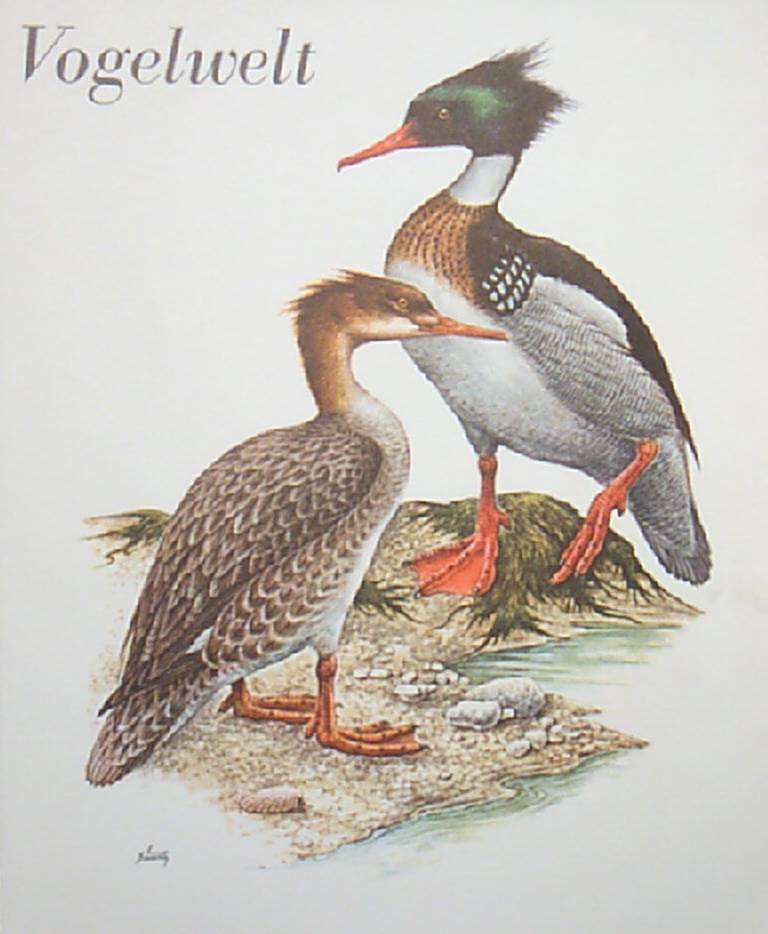 Bird Lithograph-Bonrety Vogelwelt