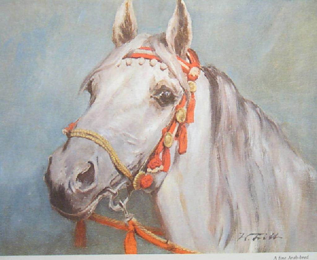 "Vintage Horse Wolfgang Tritt Watercolor ""A Fine Arab-bred"""