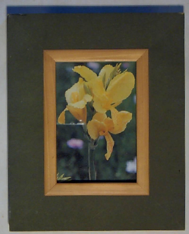 Framed Cannas Photographic print