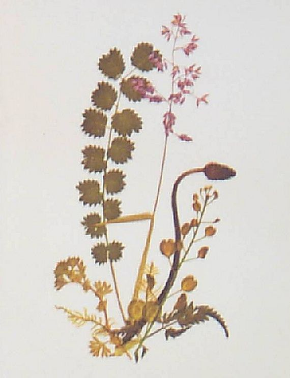 Wildflower Botanical Thistle Flower Print-Lithograph