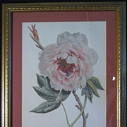 Camellia Lithograph Framed