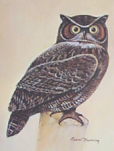 Owl Ruane Manning