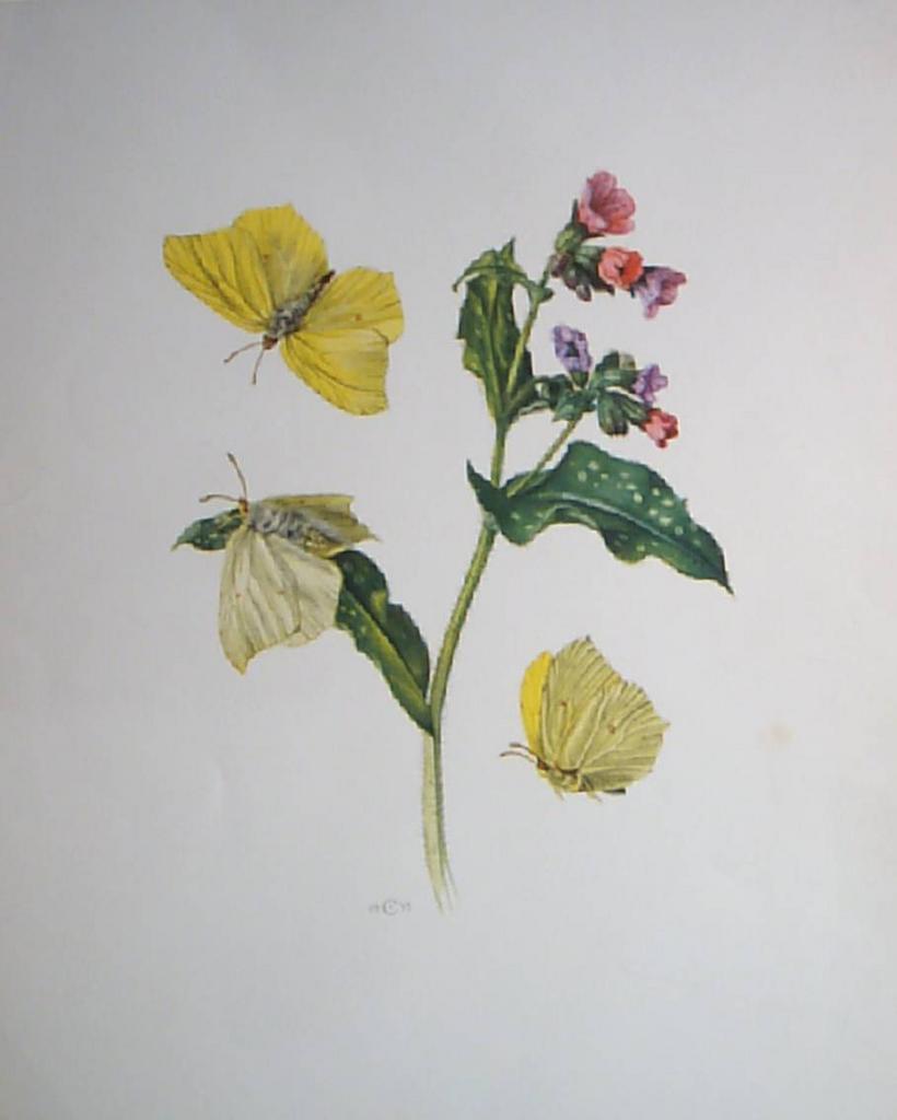 Botanical Butterflies Lithograph from 1955