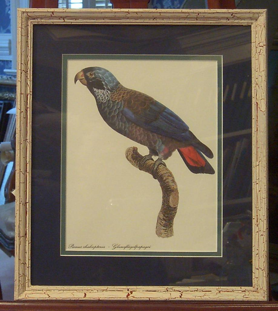 Botanical Bird Lithograph Framed