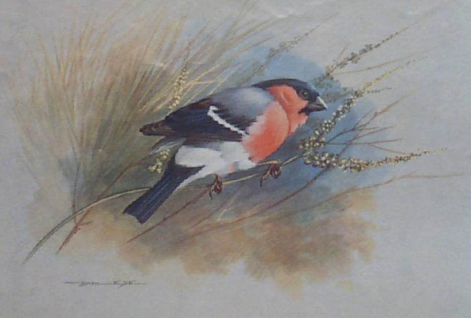 Birds Basil Bullfinch