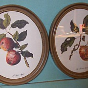 Botanical Lithographs-Apples in Oval Frames