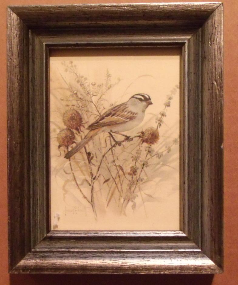 Framed Mini Bird Lithograph