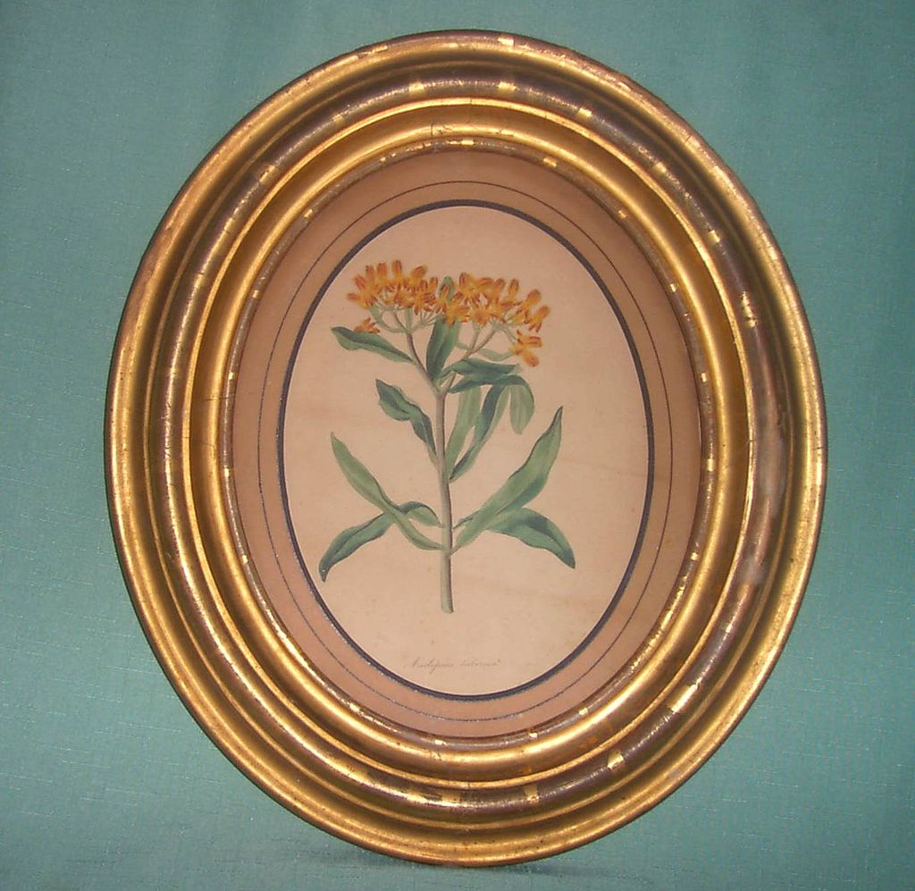 Antique Botanical in Gilded Oval Frame