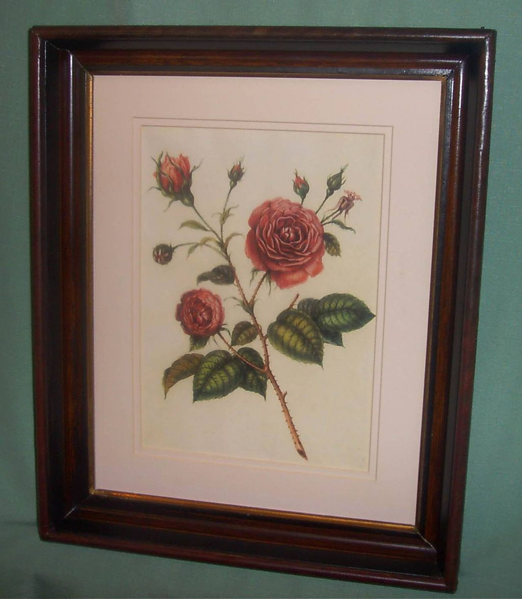 Botantical Floral Rose Lithograph Framed in Mahagony