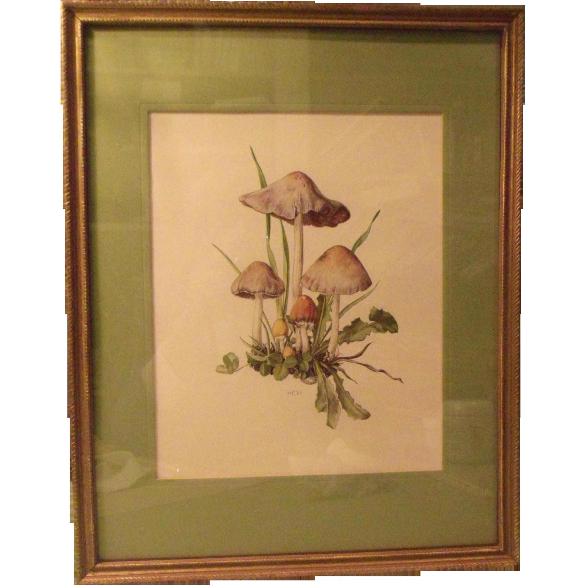 Mushrooms Framed Art
