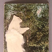 Early 1900's Scene From Yellowstone Park with Furry Bear Add-on