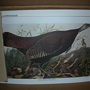 Vintage Set of Audubon Bird Prints in Original Box