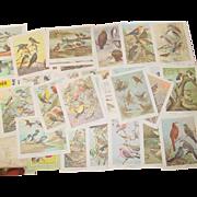 Bird Watching Portraits in Color 30 Print Set Audubon Book General Mills Art Promo