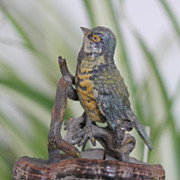 Antique Vienna Bronze figure modelled as a colourful bird, late 19th century
