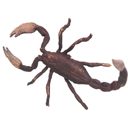 Lovely Vienna Bronze figure of a Scorpion, early 20th century