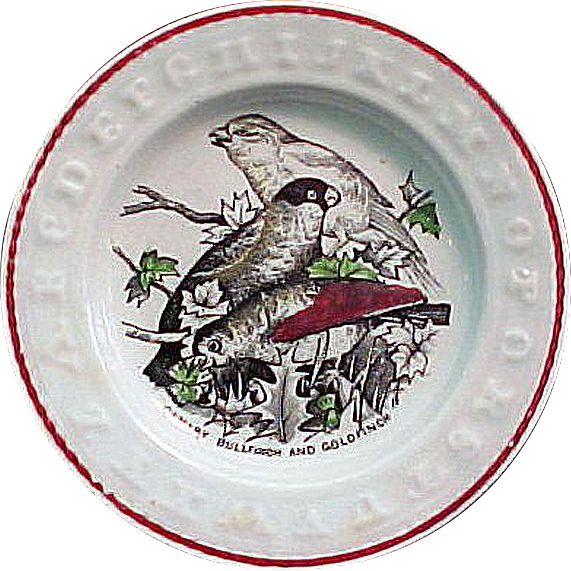 ABC Plate ~ Canary, Bullfinch, and Goldfinch 1840