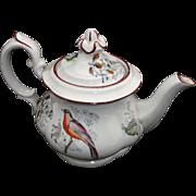 Childs Polychrome Teapot BIRDs & Garden Flowers Minton Staffordshire England c1845