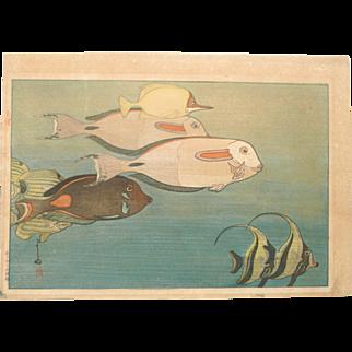 Hiroshi Yoshida Woodblock Print - Fishes of Honolulu - Red Jizuri