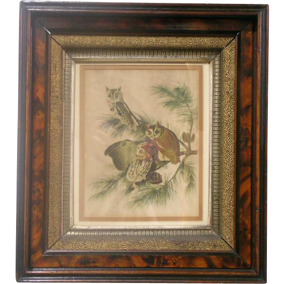 Circa 1880 Framed Print of Owls