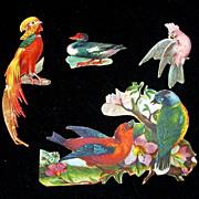 Victorian Diecuts/Cutouts of Birds, 4 Various Circa 1880's