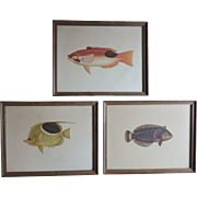 Group Three Framed 19th century Natural History Fish Prints by Cuvier & Valenciennes with Vanderbilt Provenance