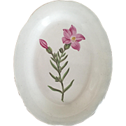 Antique Early 19th century English Shorthose Pearlware Creamware Botanical Pottery Oval Plate - Shrubby Chironia 1810