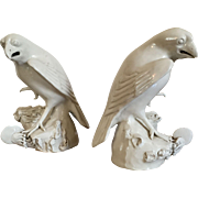 Antique Early 19th century Chinese Blanc de Chine Porcelain Models of Birds - Hawks or Falcons