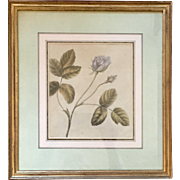 Antique 18th century English Botanical Watercolor by Lady Charlotte Murray 1785 - A Rose - Clarendon Gallery London
