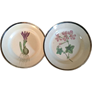 Pair Antique Early 19th century Shorthose Creamware Pearlware Botanical Plates Decorated with Hand Painted Specimens & Silver Luster Borders 1810